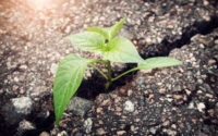 green plant growing from crack in asphalt